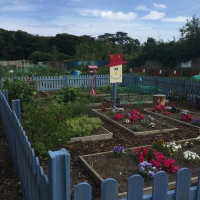 This is what an award winning allotment looks like!